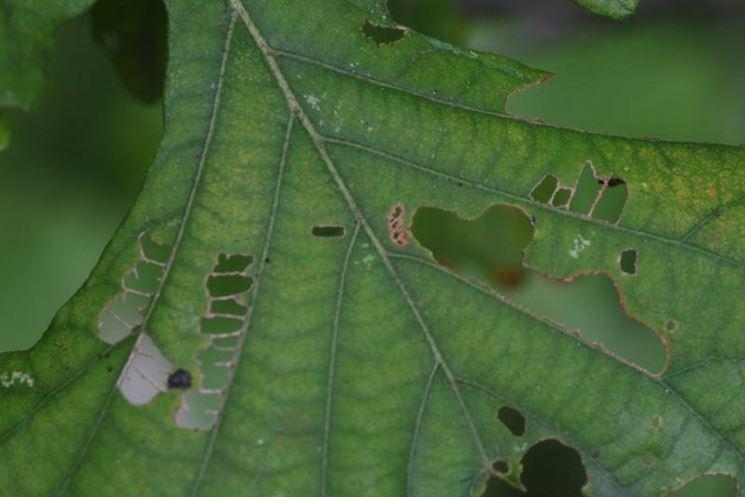 Insetti delle piante