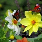 farfalle e colori