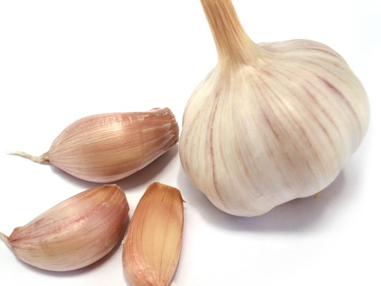 aglio rimedio naturale