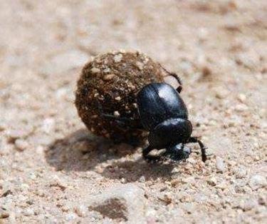 scarafaggio1-1_zps57f2e138
