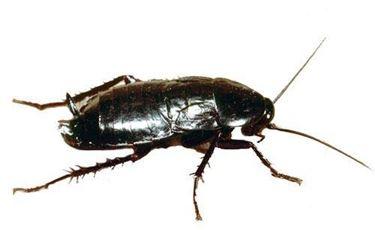 scarafaggio2-1_zpsb4831d3e