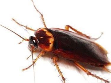 scarafaggio3-1_zps70003ce6