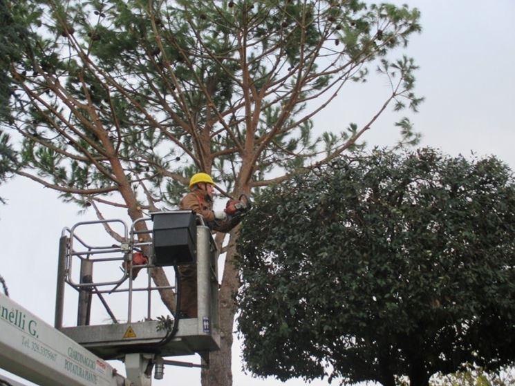 Potare alberi da frutto potatura potatura alberi da frutto for Quando piantare alberi da frutto