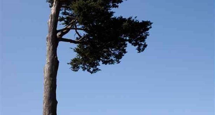 albero molto alto