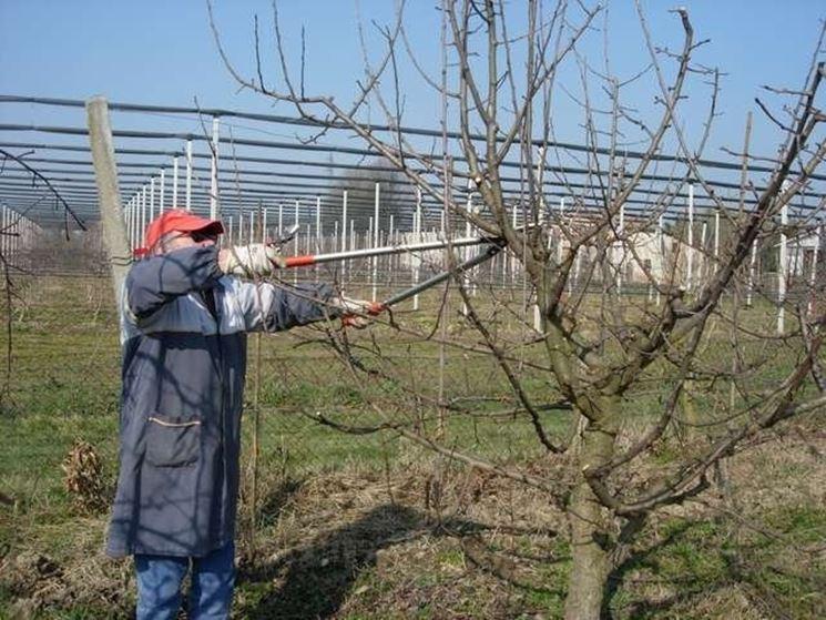 Potatura di alberi da frutto