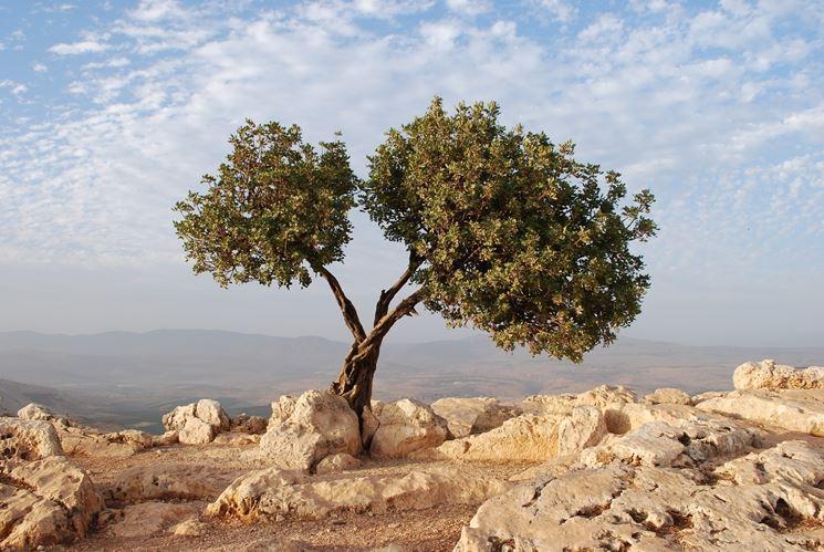 I frutti dell'olivo: le olive