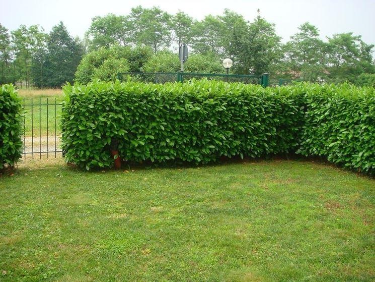 Image gallery siepi - Tipi di giardino ...