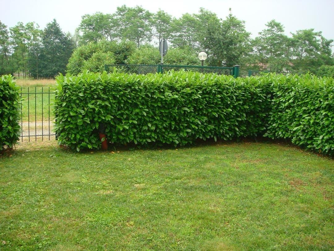 le siepi? Perché realizzare una siepe nel nostro giardino ...