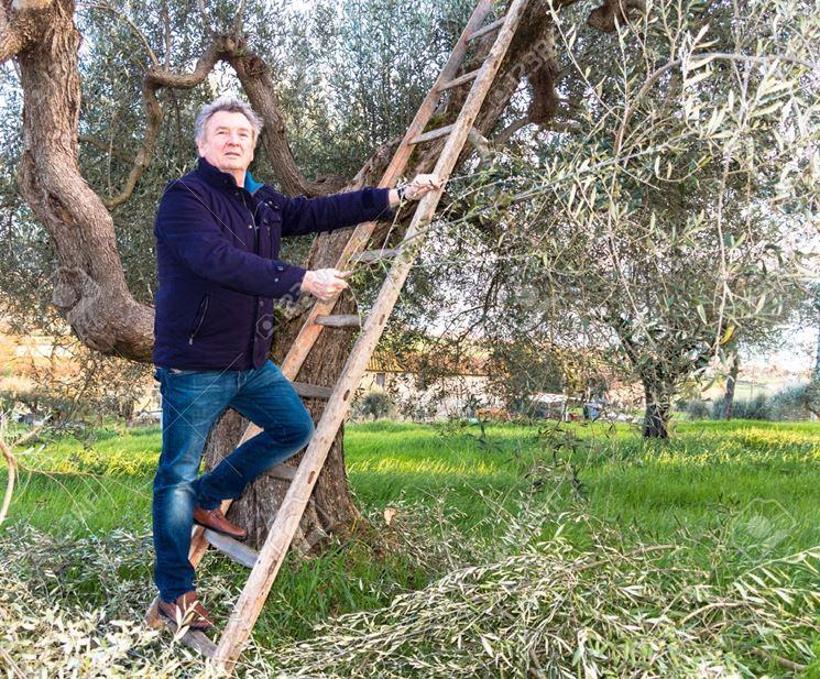 Oliveto in toscana