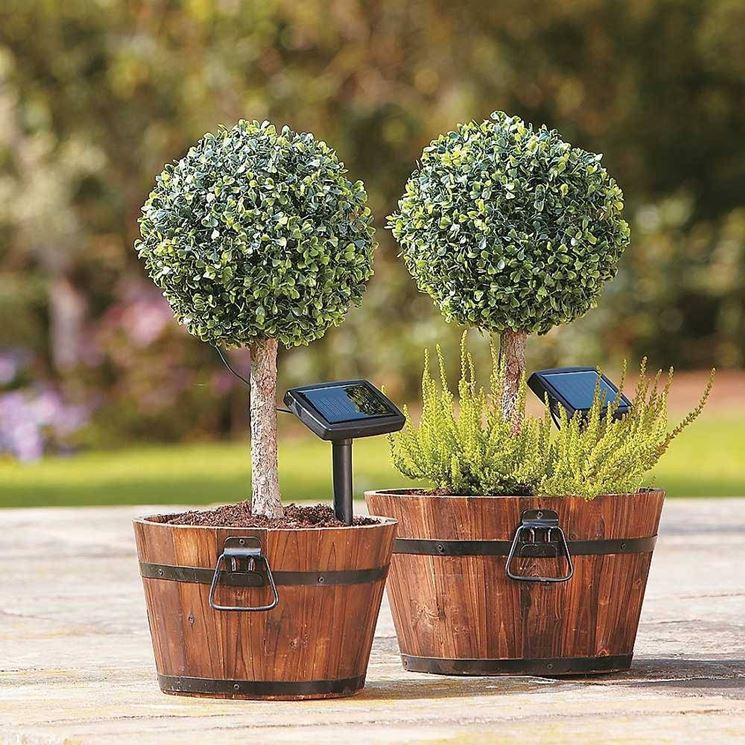 Alberi da giardino alberi latifolie alberi da giardino - Alberi da giardino piccoli ...