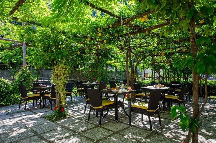 Alberi da ombra alberi latifolie giardino di alberi - Vendita alberi da giardino ...