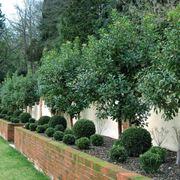 alberi da giardino per fare ombra