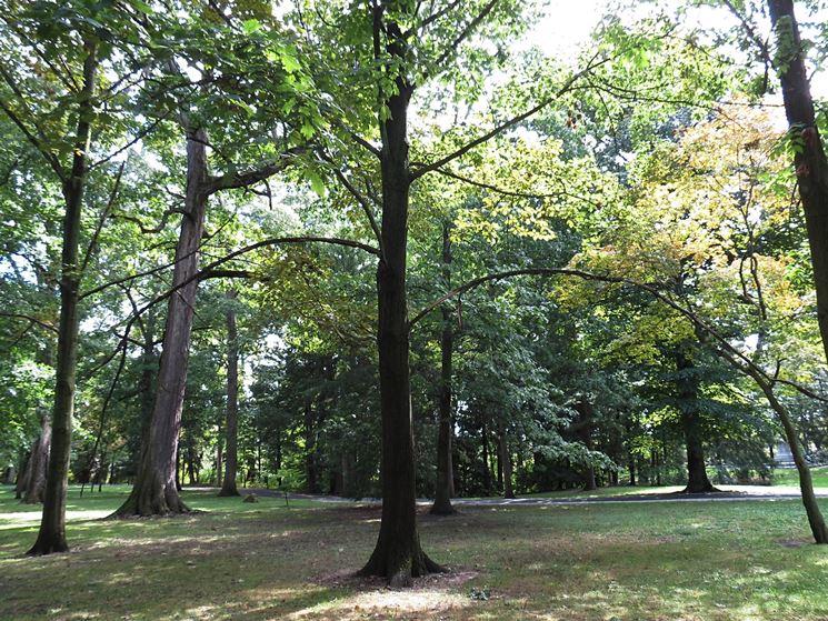 Foresta di alberi ad alto fusto
