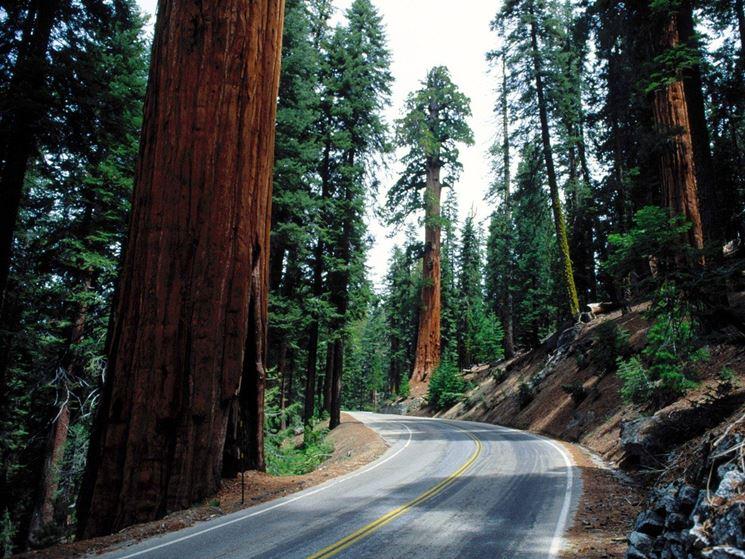 Parco Nazionale di Redwood, ricco di Sequoie