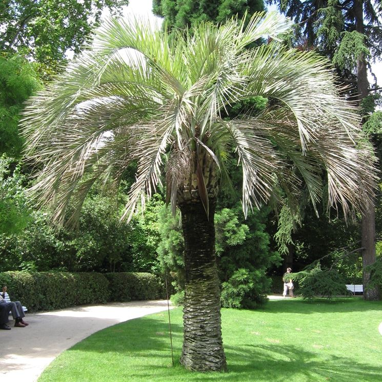 Alberi giardino - Alberi Latifolie - Caratteristiche degli alberi da ...