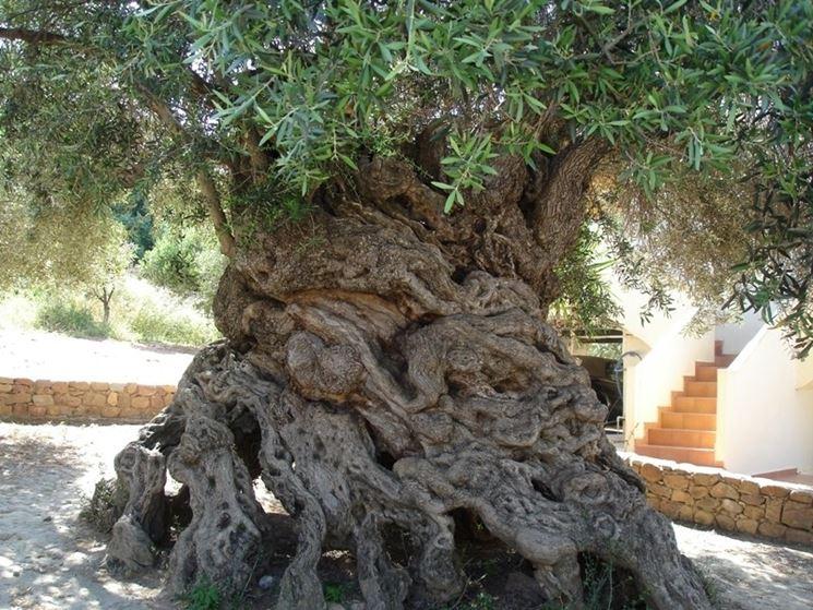 Alberi monumentali alberi latifolie alberi monumentali - Alberi adatti per viali ...