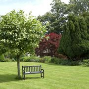 alberi per giardino