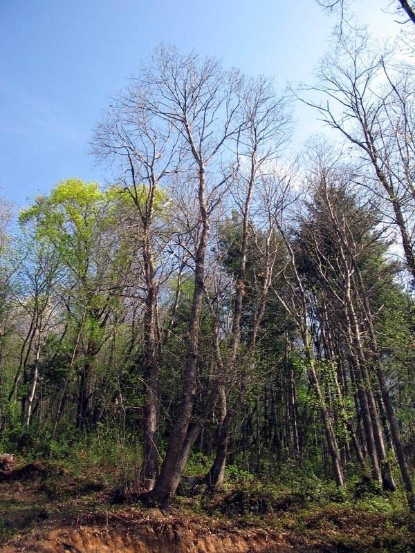 Alberi per giardino alberi latifolie alberi per il giardino - Alberi ornamentali per giardino ...