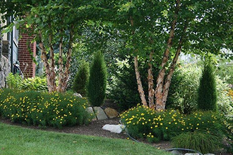 Alberi sempre verdi alberi latifolie alberi sempre - Alberi ornamentali sempreverdi da giardino ...