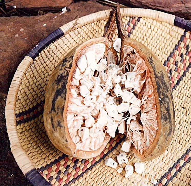 Frutto albero di baobab