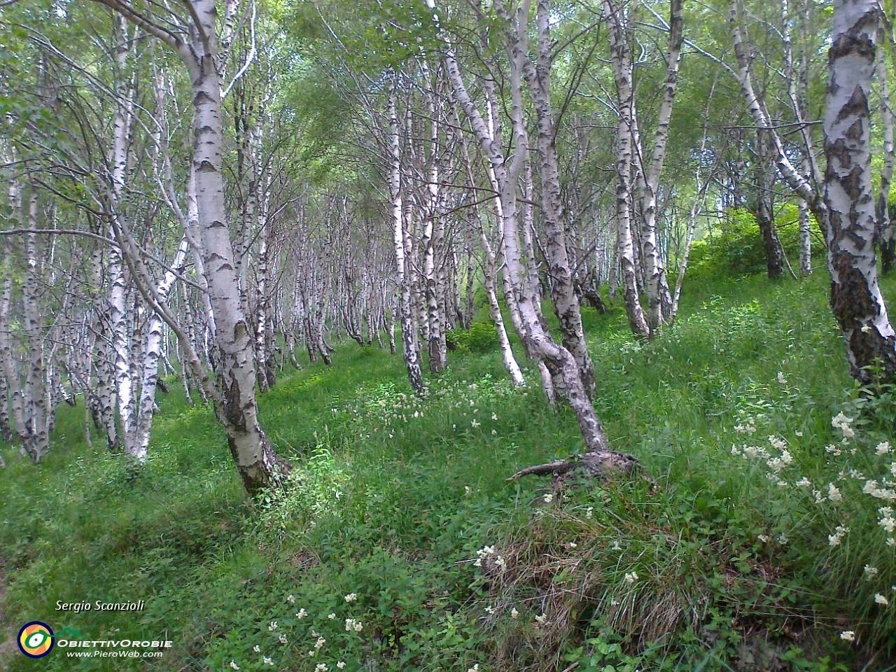 Albero da giardino alberi latifolie alberi da giardino - Alberi da giardino piccoli ...