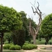 alberi da giardino prezzi
