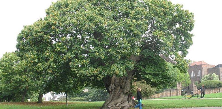 <h6>Albero di castagno</h6>Impara a coltivare l'albero di castagno e ad utilizzare i suoi frutti con la nostra guida informativa!