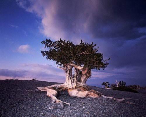 Albero ulivo alberi latifolie potatura e costo albero for Costo alberi da giardino