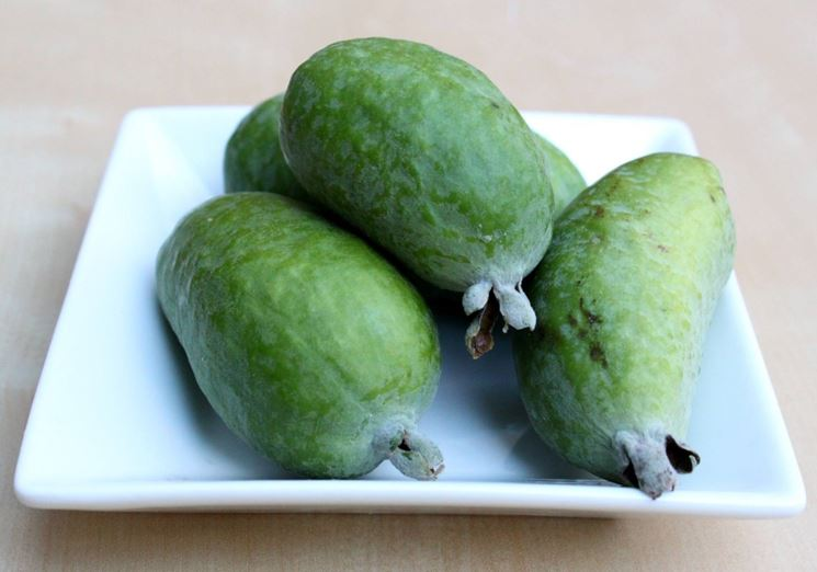 Frutto della feijoa sellowiana