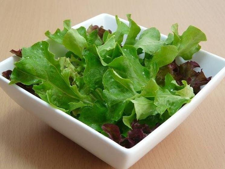tipologia di insalata foglia quercia