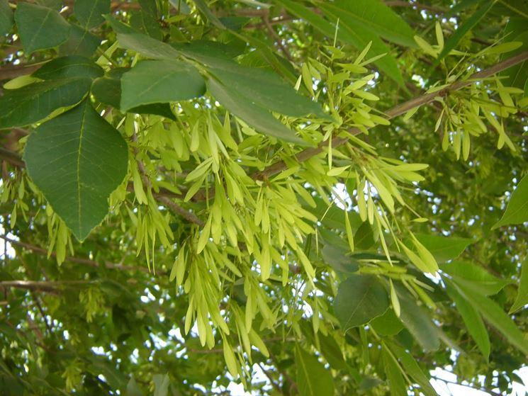 Rami foglie albero latifoglie