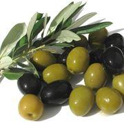 I frutti dell'olivo