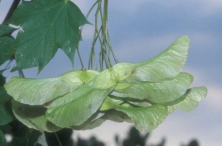 Attacco fungino sulla pianta