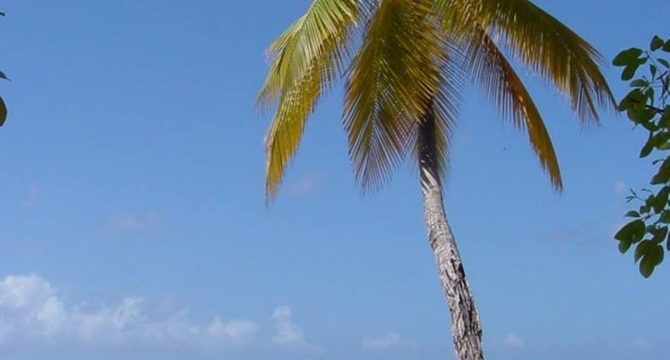 Una palma su una spiaggia