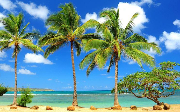 Palme in ambienti tropicali