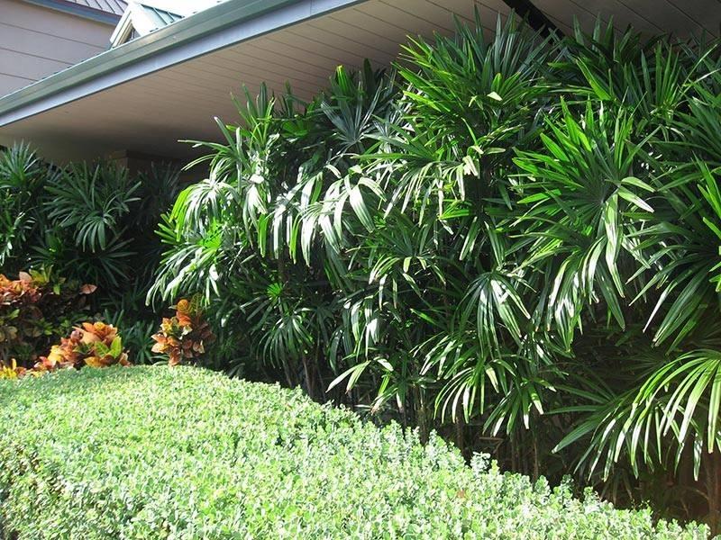Palme da giardino alberi latifolie tipi di palme da - Tipi di giardino ...