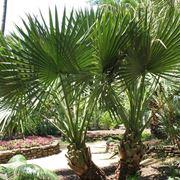 palme da giardino prezzi