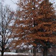 alberi caducifoglie