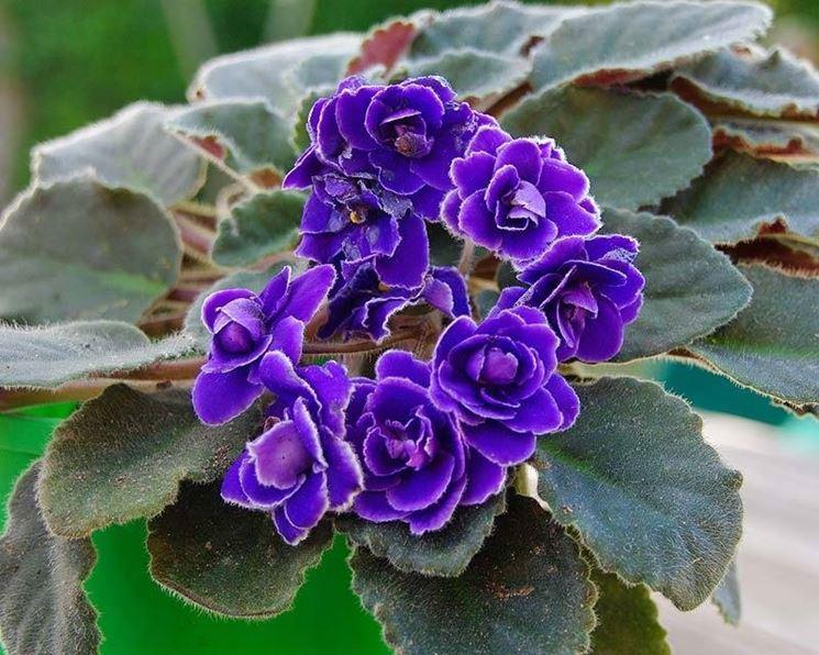 Piante con fiori alberi latifolie piante con fiori - Piante da interno con fiori ...