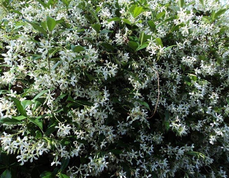 Piante con fiori alberi latifolie piante con fiori for Fiori sempreverdi da giardino
