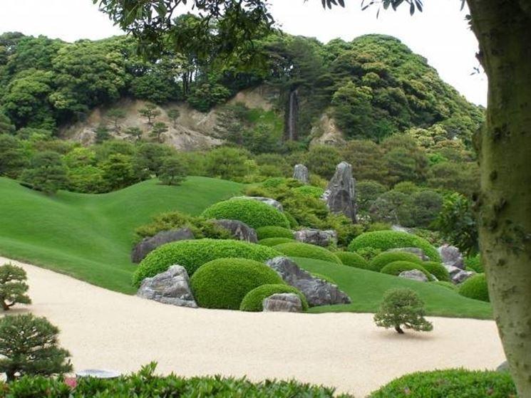 Piante giapponesi - Alberi Latifolie - Curare piante giapponesi