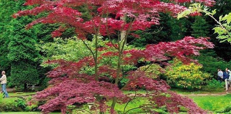 <h6>Piante giapponesi</h6>I giardini giapponesi sono spazi curati nei minimi dettagli e in grado di regalare una sensazione di serenit� e benessere. Scegli le piante giapponesi per creare il tuo giardino di pace!