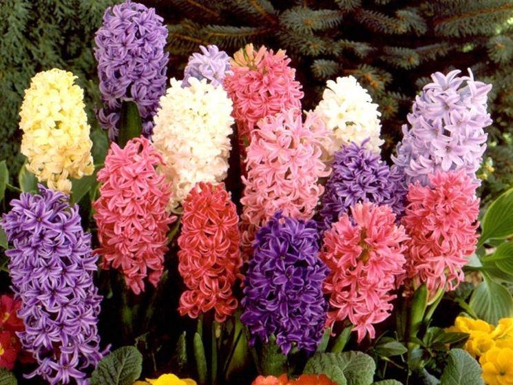 Bulbi da fiore bulbi bulbi da fiore per giardino for Giardino fiori