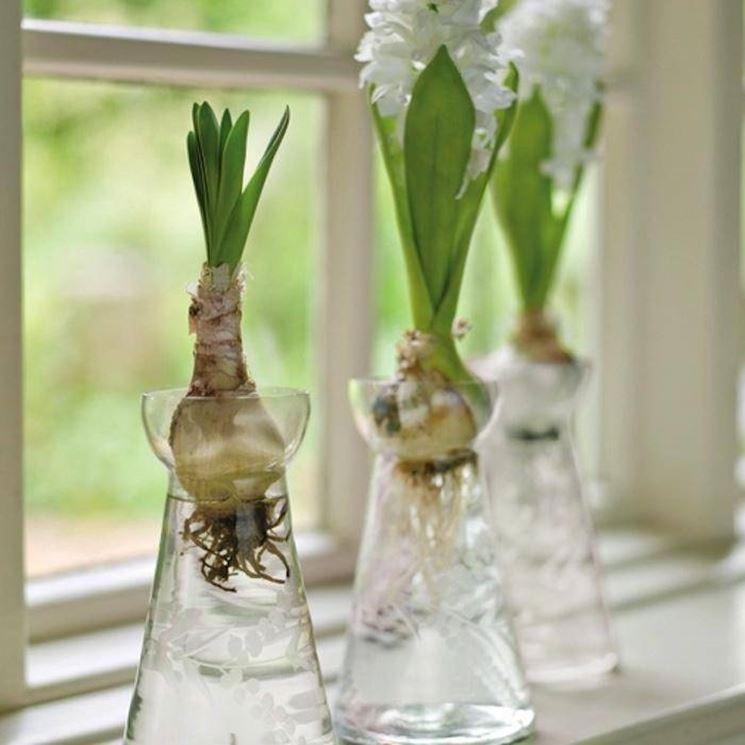 piante da bulbi