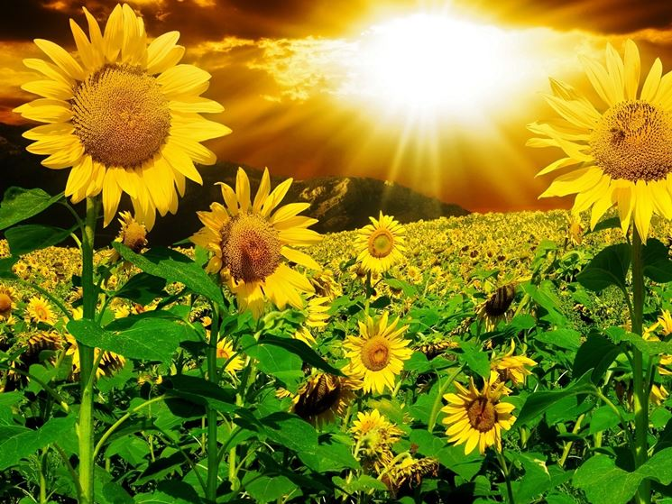 fiori estivi - bulbi - bulbi di fiori estivi