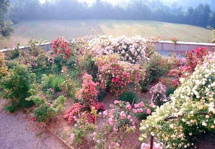 Bellissimo giardino fiorito