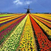 Tipico panorama olandese