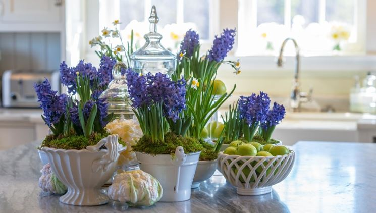 Il giacinto in vaso