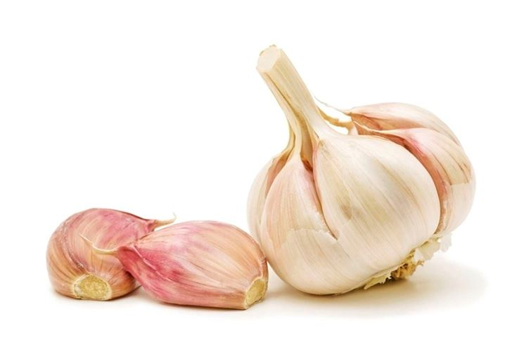 Testa d'aglio e bulbilli