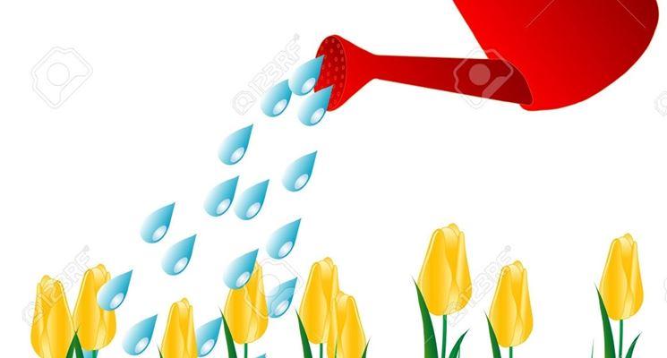 Cura dei tulipani
